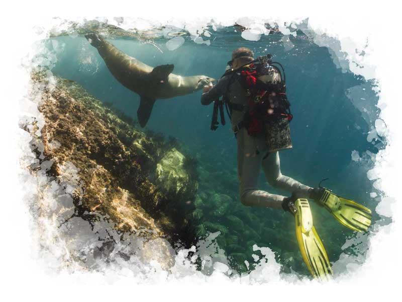 Go scuba diving in the Galapagos Islands on a private luxury Galapagos tour