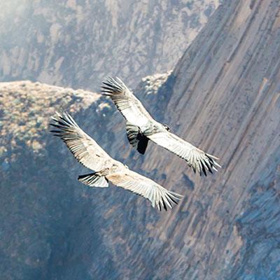 aa-arequipa-colca-canyon.jpg