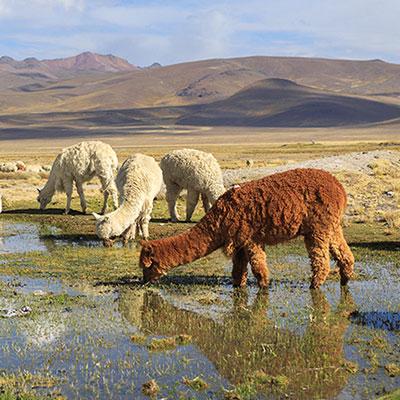 aa-arequipa-exotic-wildlife.jpg