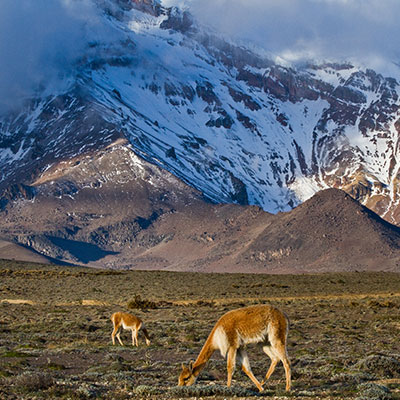 aa-cotopaxi-exotic-wildlife.jpg