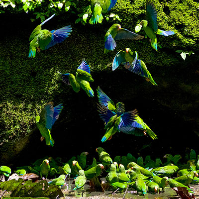 aa-ecuador-amazon-exotic-wildlife.jpg