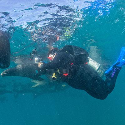 aa-galapagos-swim-sea-lions.jpg