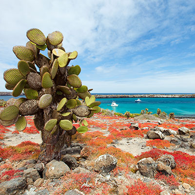 aa-galapagos-wonder-islands-1.jpg