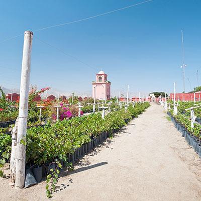 aa-ica-vineyards-1.jpg