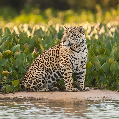 aa-iquitos-exotic-wildlife.jpg