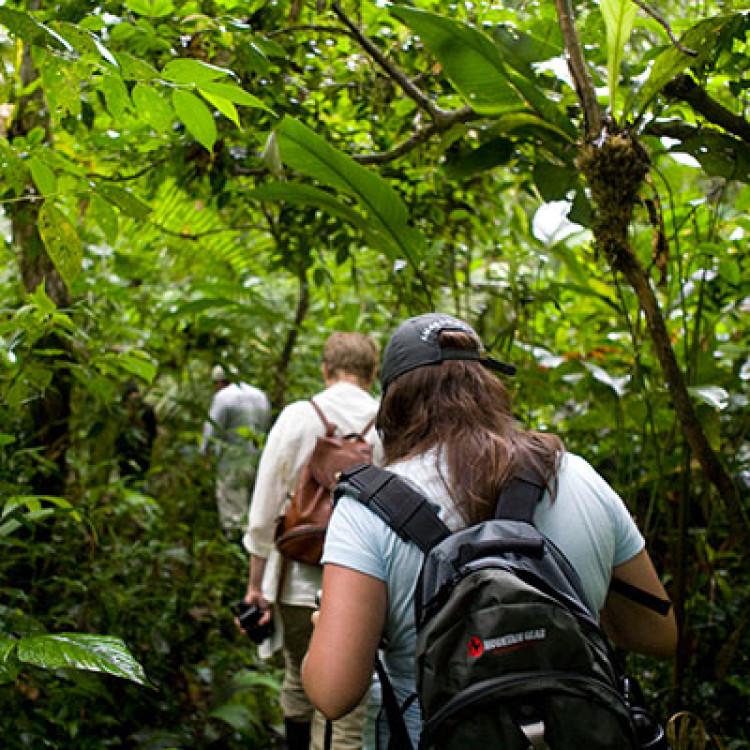 Rainforest Excursions
