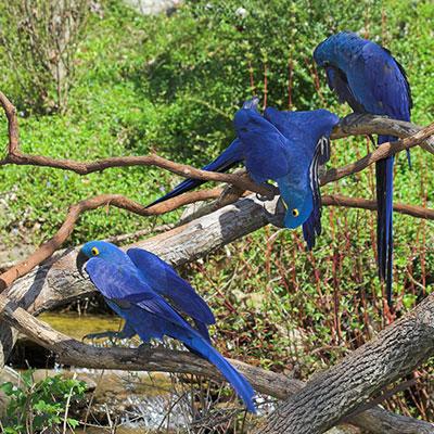 aa-iquitos-spotting-birds.jpg