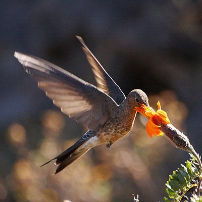 aa-machu-picchu-bird-spotting.jpg