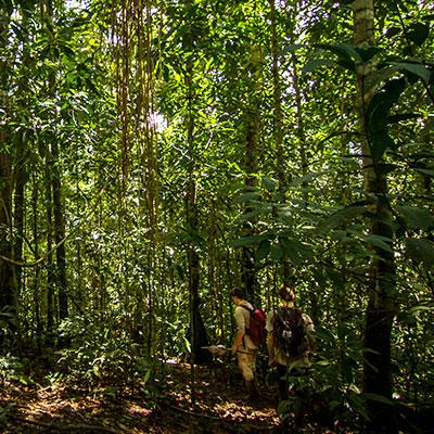 aa-manu-jungle-treks-1.jpg