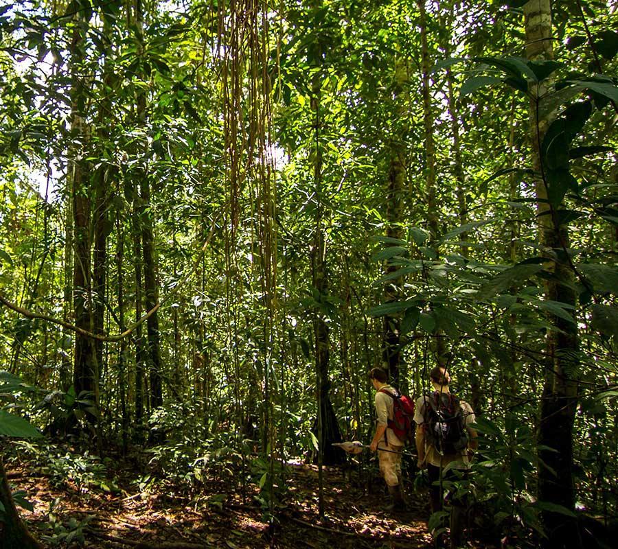 aa-manu-jungle-treks-2.jpg