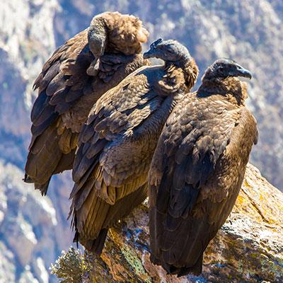 aa-otavalo-condor-park.jpg