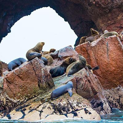 aa-paracas-ballesta-islands.jpg