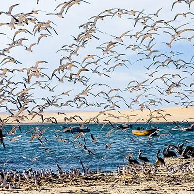 aa-paracas-exotic-wildlife-1.jpg