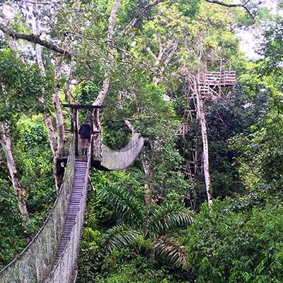 aa-tambopata-canopy-walks.jpg