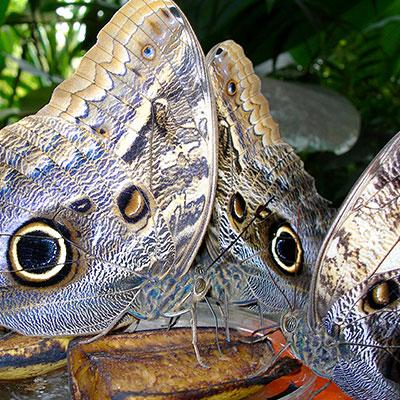 aa-tambopata-exotic-wildlife.jpg