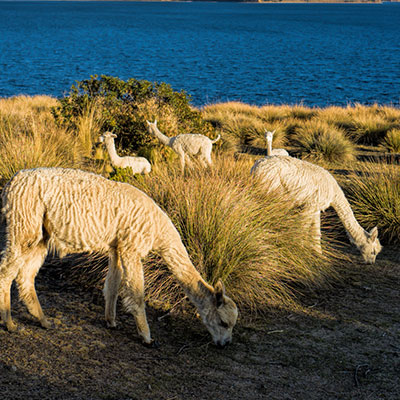 aa-titicaca-exotic-wildlife.jpg