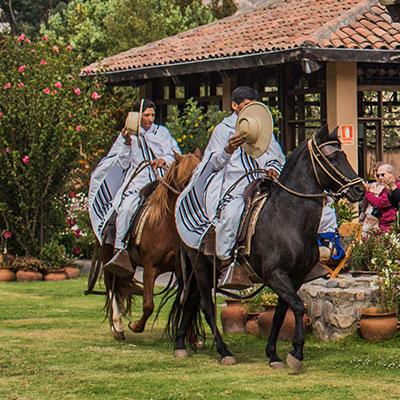 aa-trujillo-peruvian-paso-horse.jpg