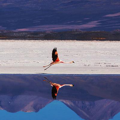 aa-uyuni-lagoons.jpg
