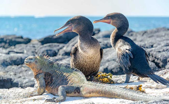 Meet exotic wildlife in a customized tour of the Galapagos Islands and Ecuador