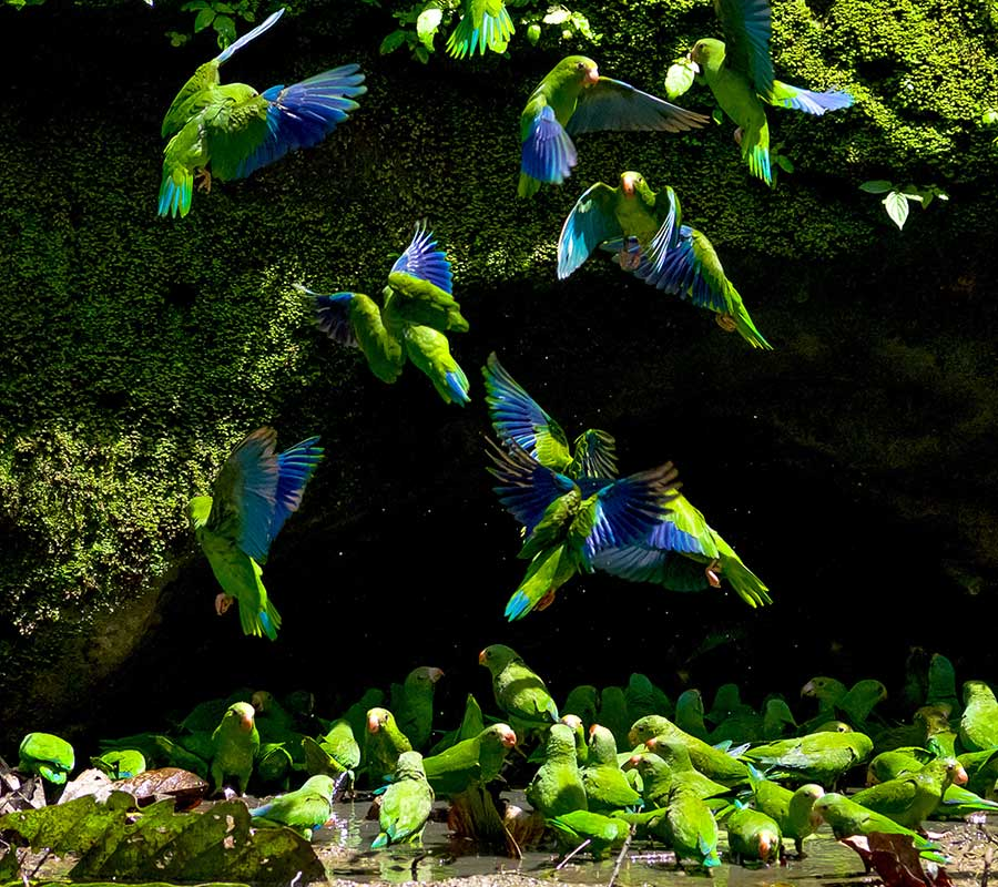faa-amazon-exotic-wildlife.jpg
