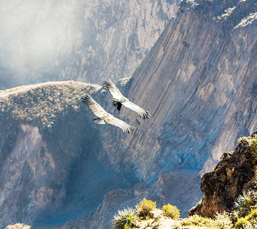 faa-arequipa-colca-canyon.jpg