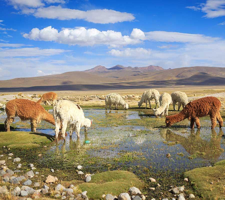 faa-arequipa-exotic-wildlife.jpg