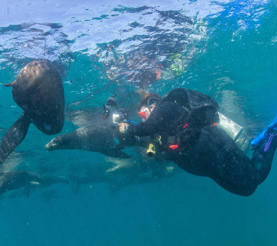 faa-galapagos-swim-sea-lions.jpg