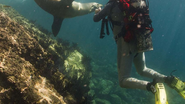 faa-galapagos-watersport-snorkeling