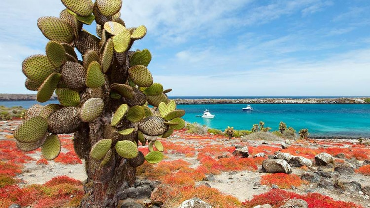 faa-galapagos-wonder-islands