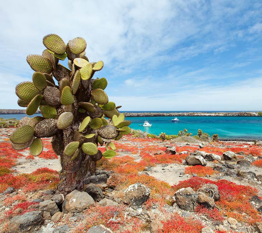 faa-galapagos-wonder-islands.jpg