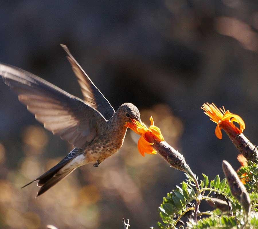 faa-machu-picchu-bird-spotting.jpg