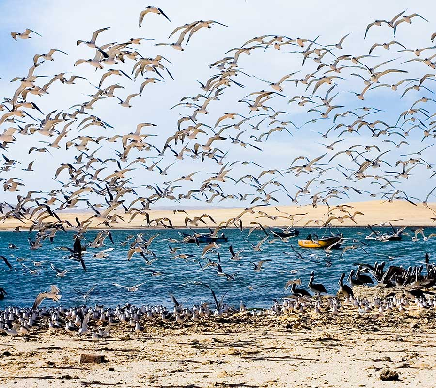 faa-paracas-exotic-wildlife.jpg