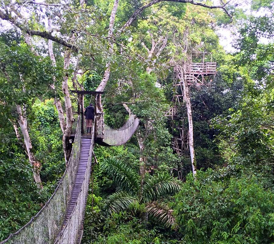 faa-tambopata-canopy-walks.jpg