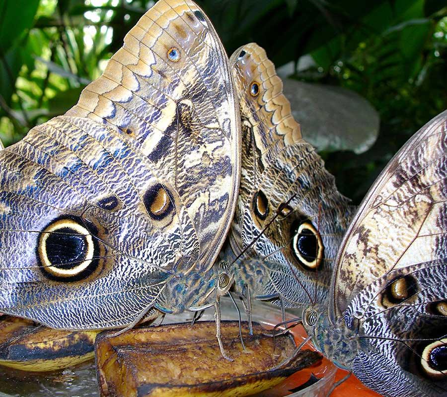 faa-tambopata-exotic-wildlife.jpg