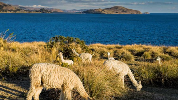 faa-titicaca-exotic-wildlife