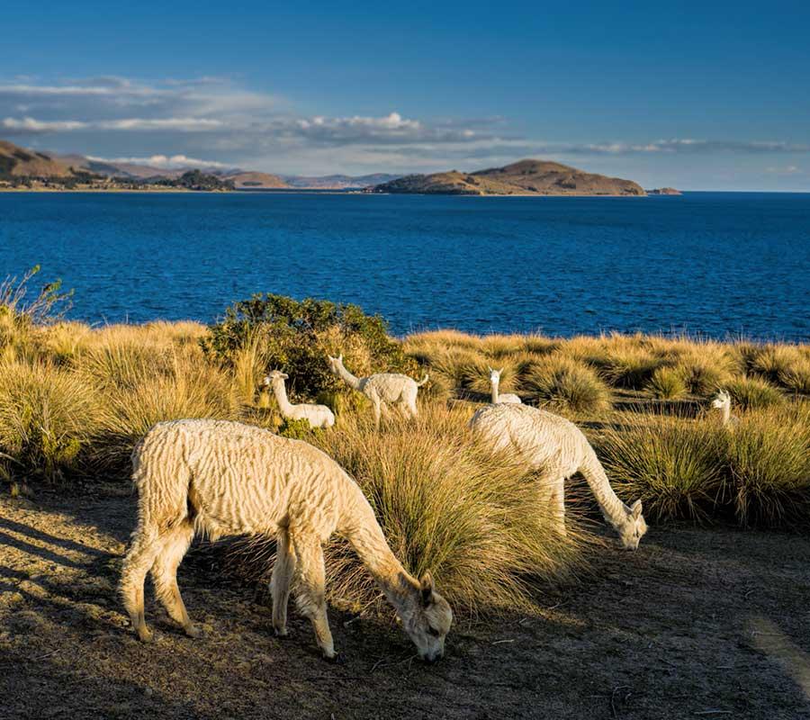 faa-titicaca-exotic-wildlife.jpg