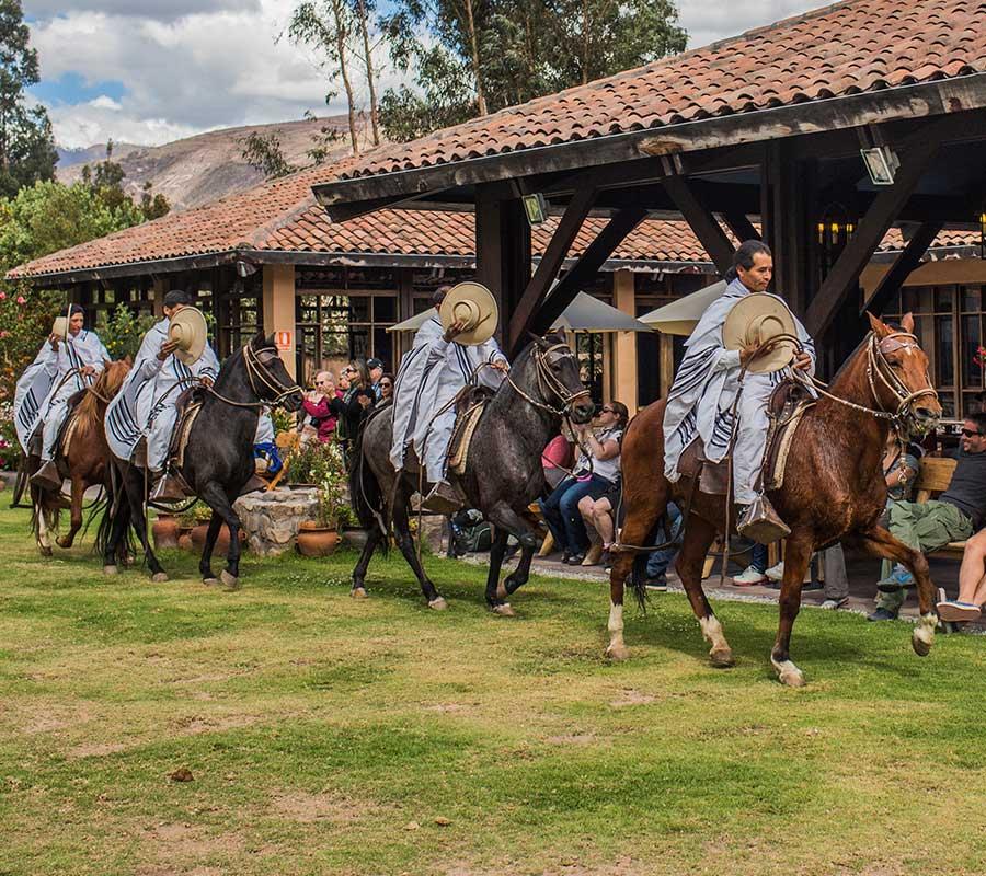faa-trujillo-peruvian-paso-horse.jpg