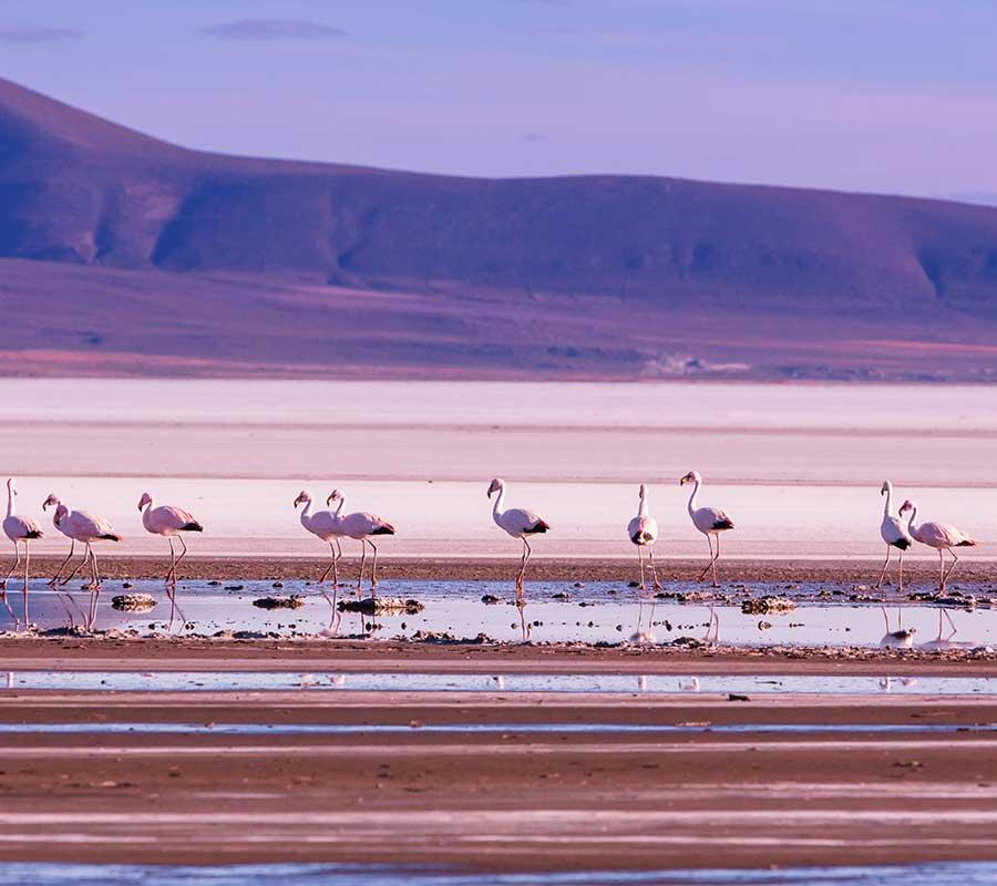 faa-uyuni-wildlife.jpg