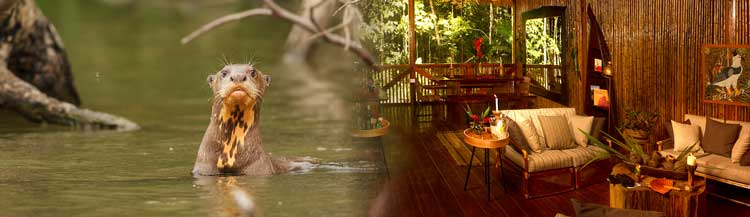 Lodges in Tambopata