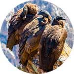 ico-otavalo-condor-park