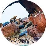 ico-paracas-ballestas-island