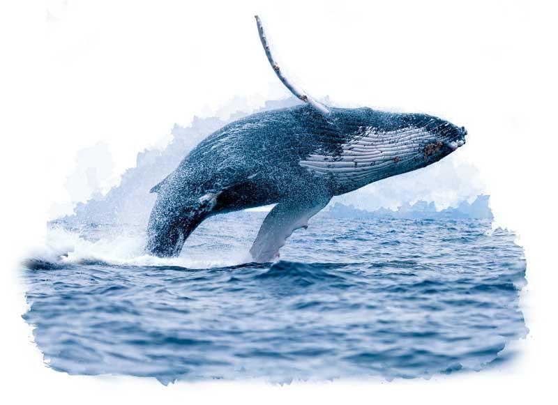 itinerary-galapagos-wildlife-perus-treasures.jpg