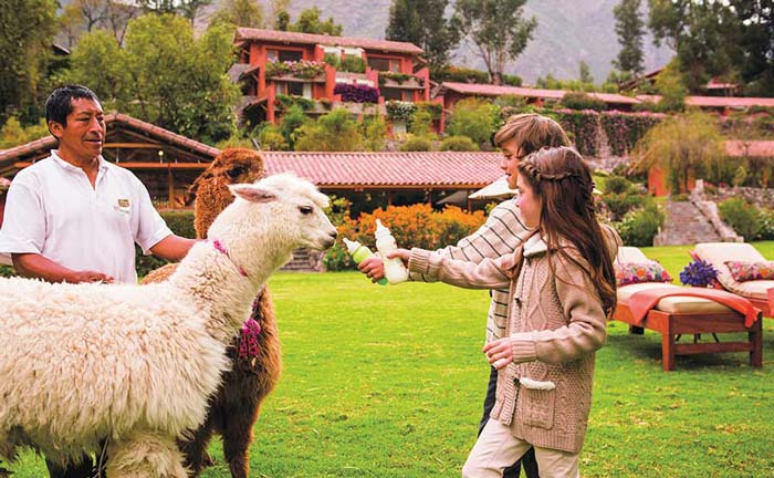 Feeding a llama on one of our family tours of Peru