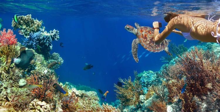 Galapagos Wildlife and Peru's Treasures