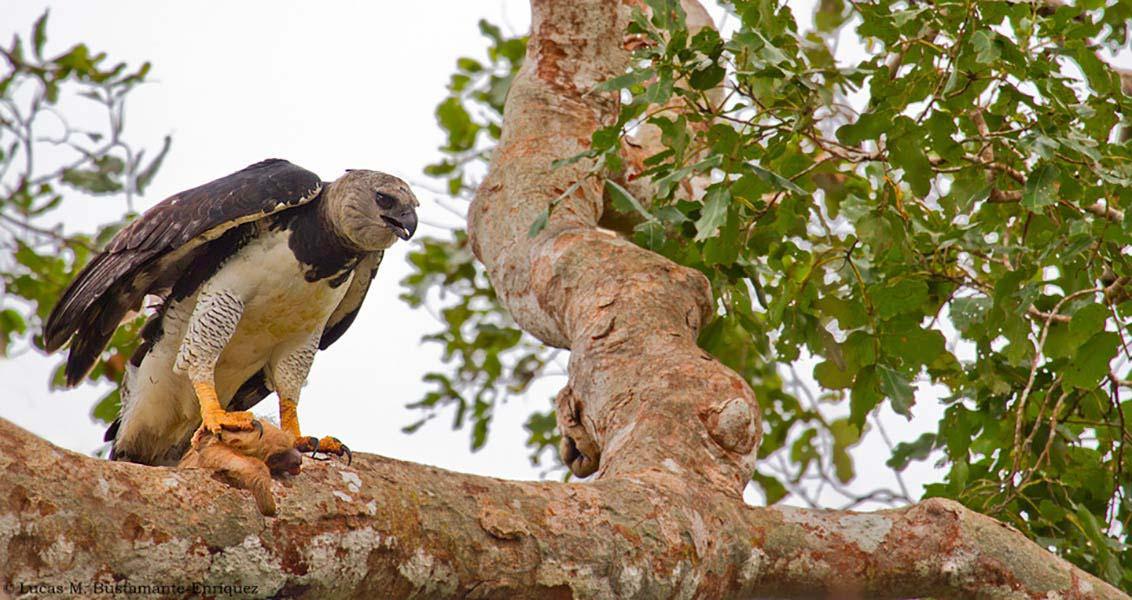 accommodation-tambopata-refugio-amazonas-6.jpg