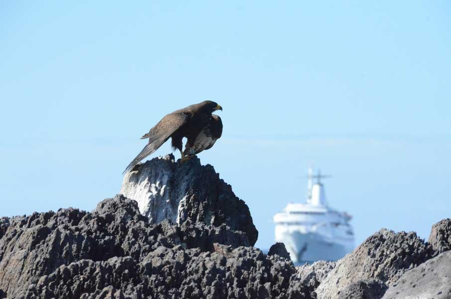 gallery-galapagos-cruise-legend-3.jpg