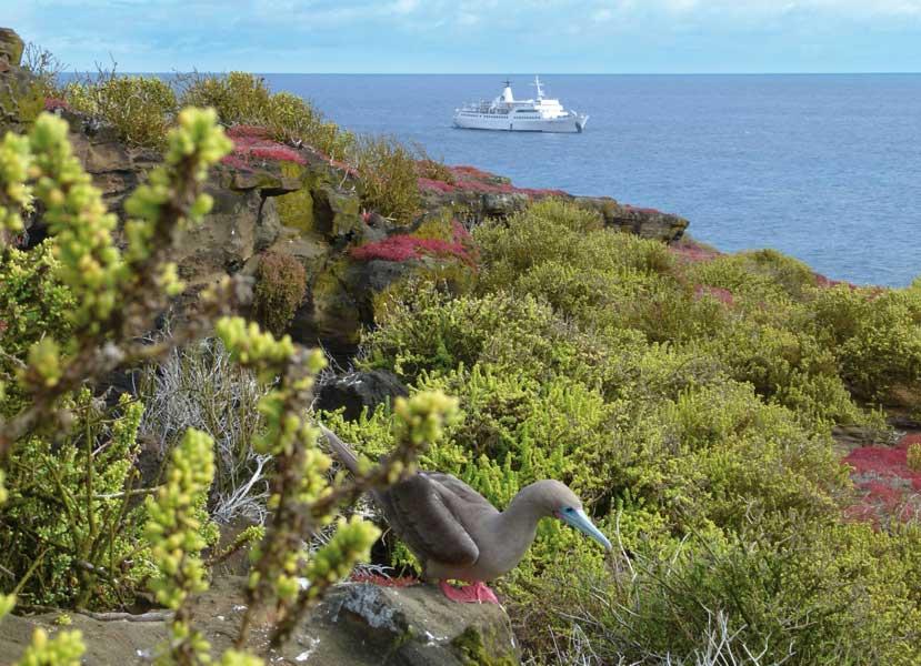 gallery-galapagos-cruise-legend-6.jpg