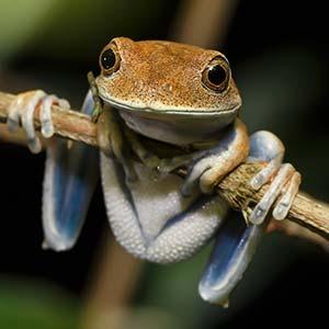 testimonial-featured-amazon-frog.jpg