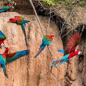 testimonial-featured-amazon-tambopata-jungle.jpg