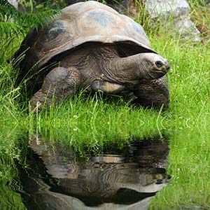testimonial-featured-giant-turtle-galapagos.jpg